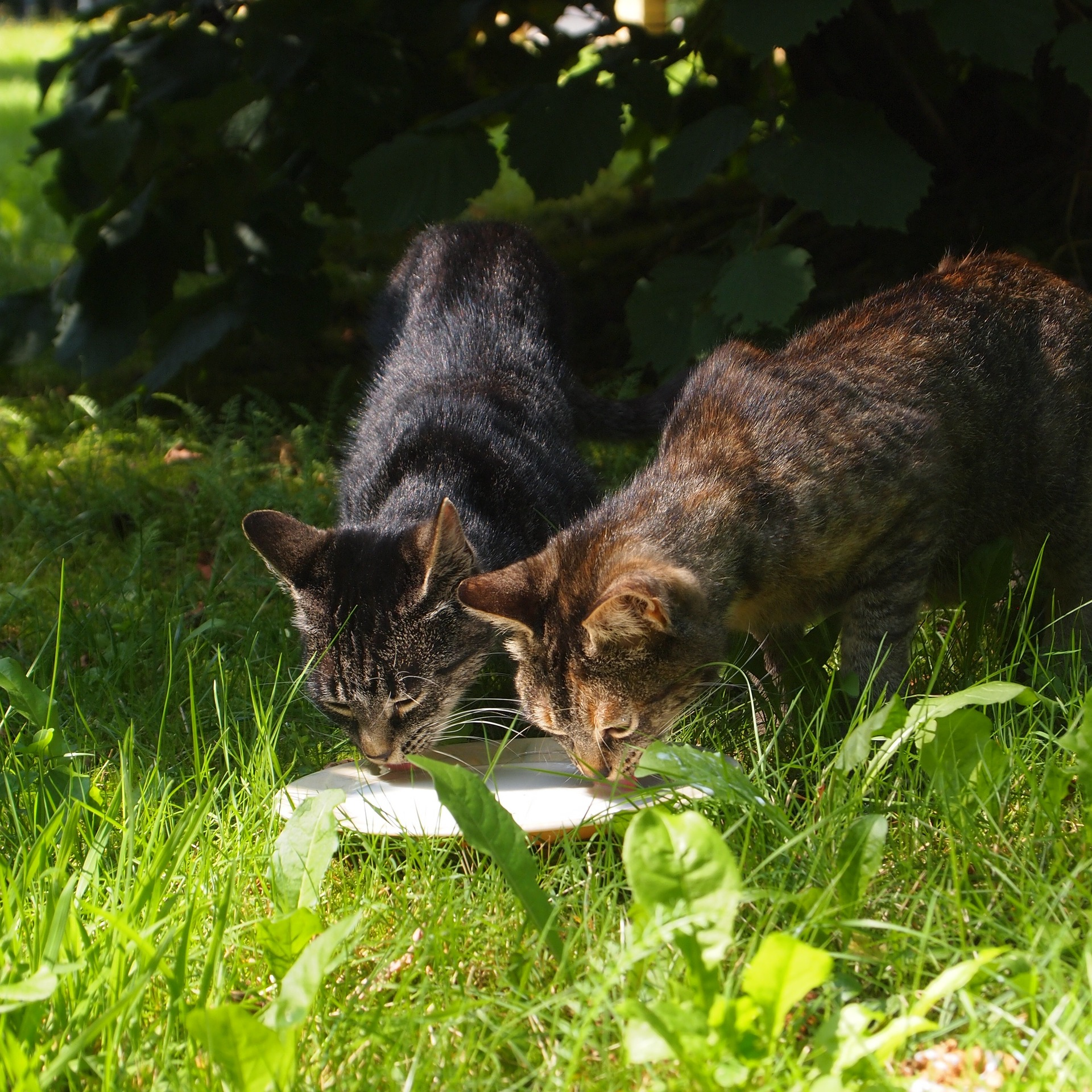 Safe Raw Food For Cats