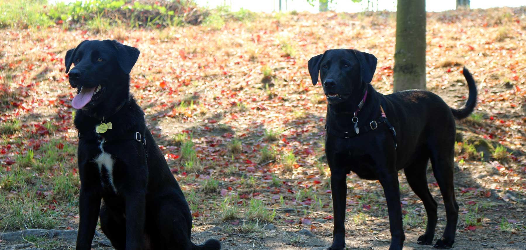 dogs-posing