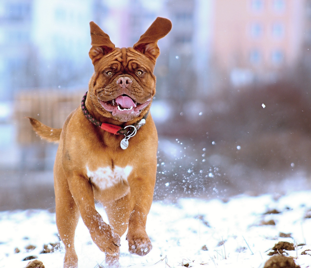 Exercising with Your Dog in Winter recommend