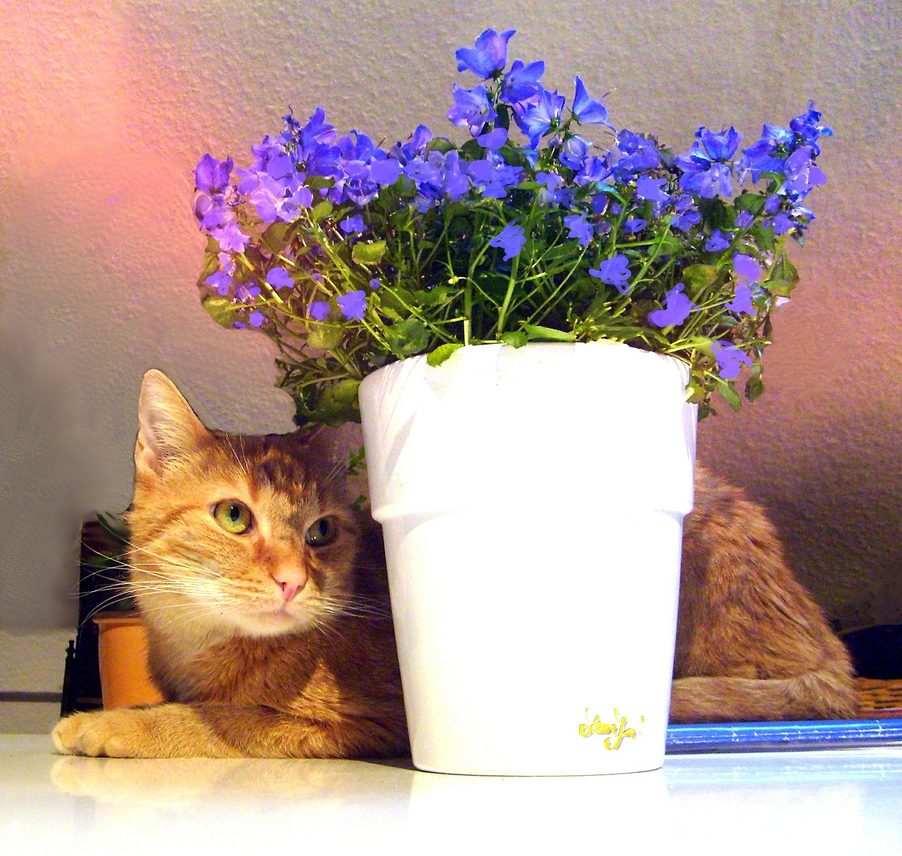 Know Your Dangers: Common Household Plants are Poisonous for Cats
