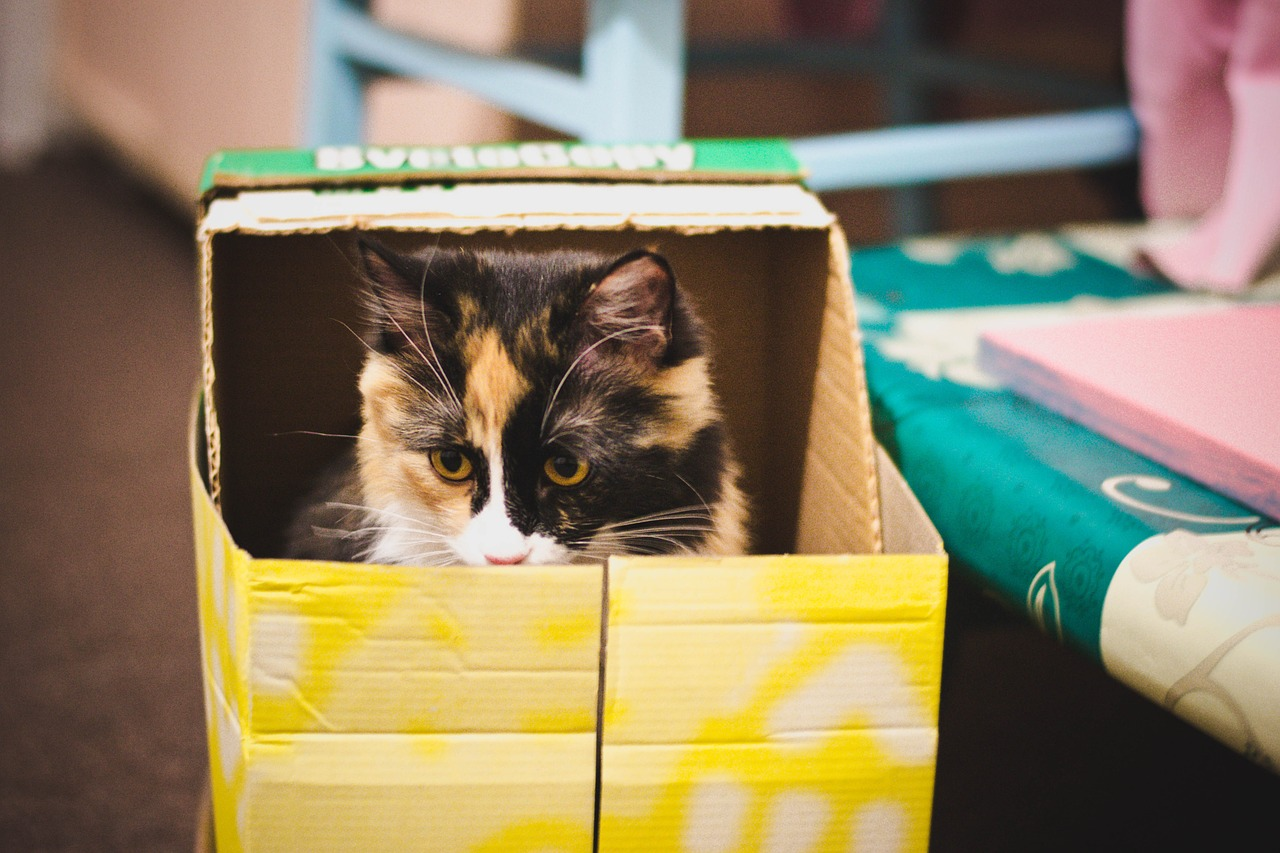 Cats & Boxes - The Endless Obsession