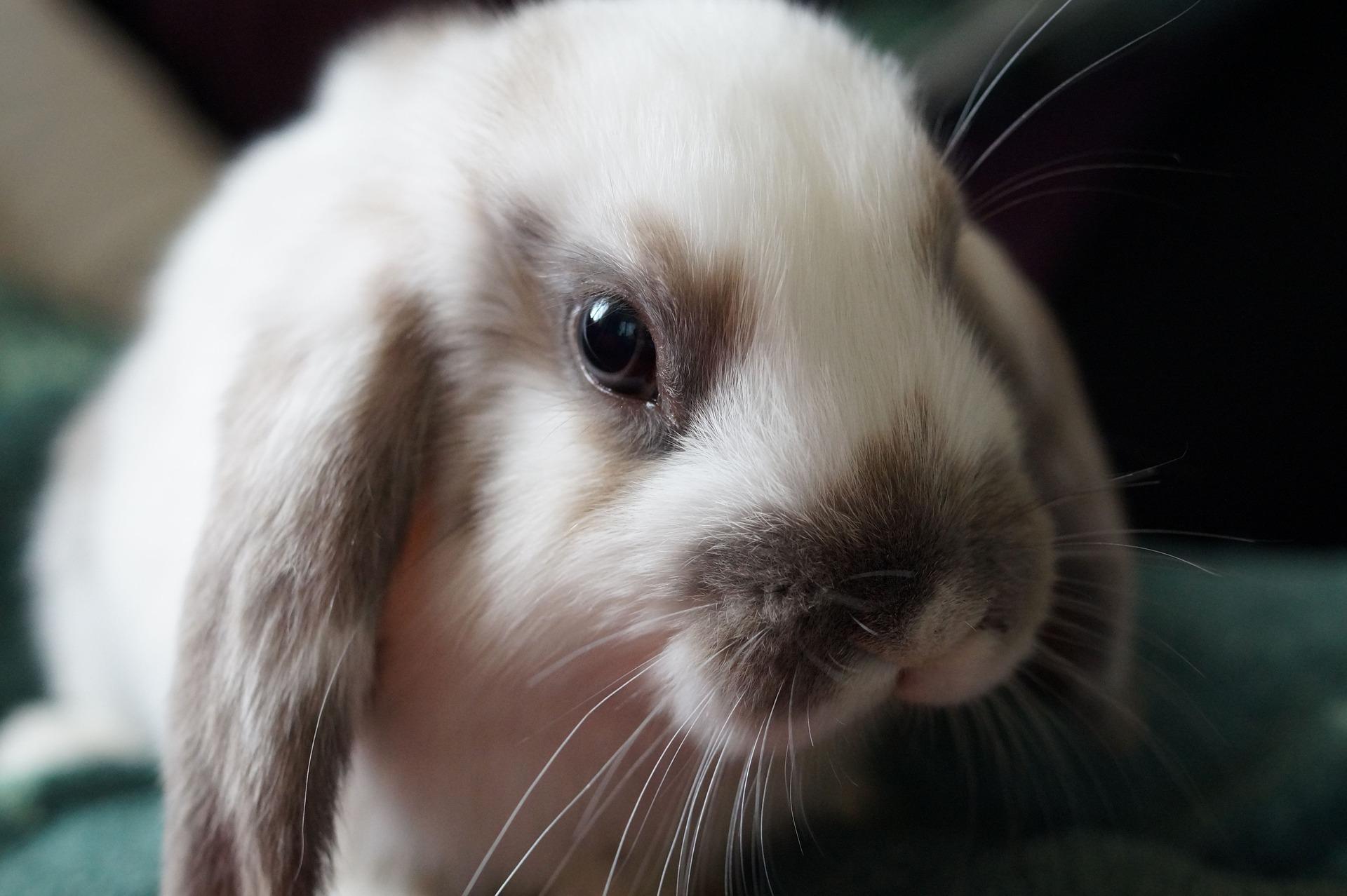 Understanding Rabbit Stress Signals