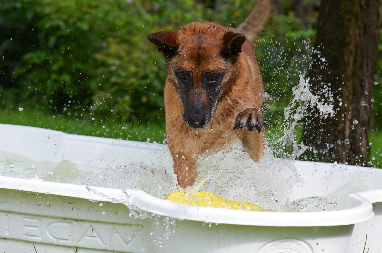 off leash dog park play