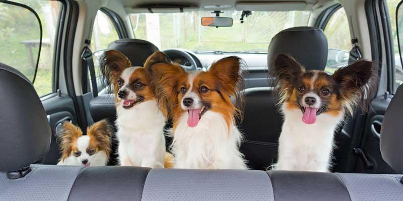 Seattle Pet Transportation Services | Sarah's Pet Care - Pet
