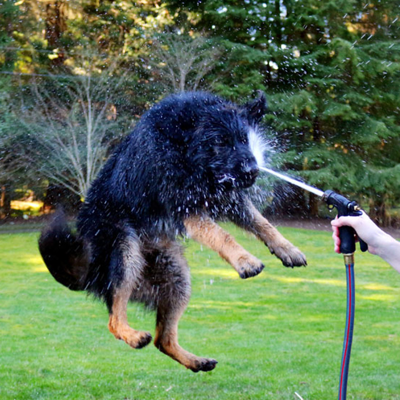 Your Pets & Beating the Heat: Being Careful About Staying Cool