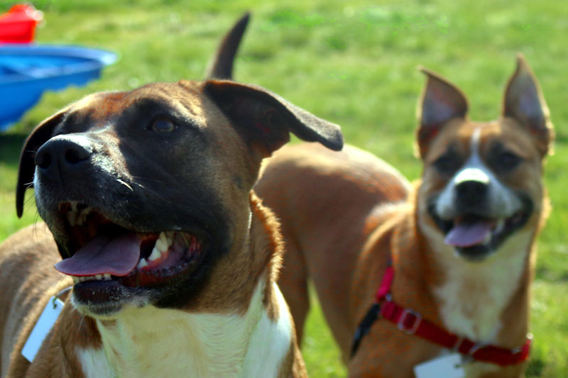 Is Your Dog Getting Enough Exercise?