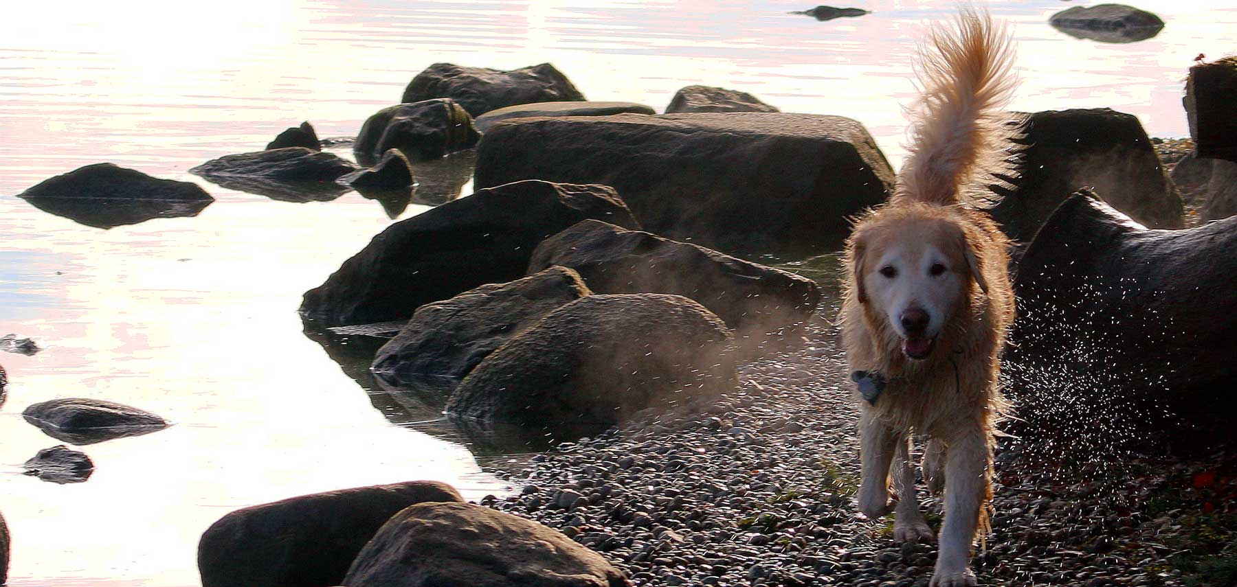 dog-at-lake