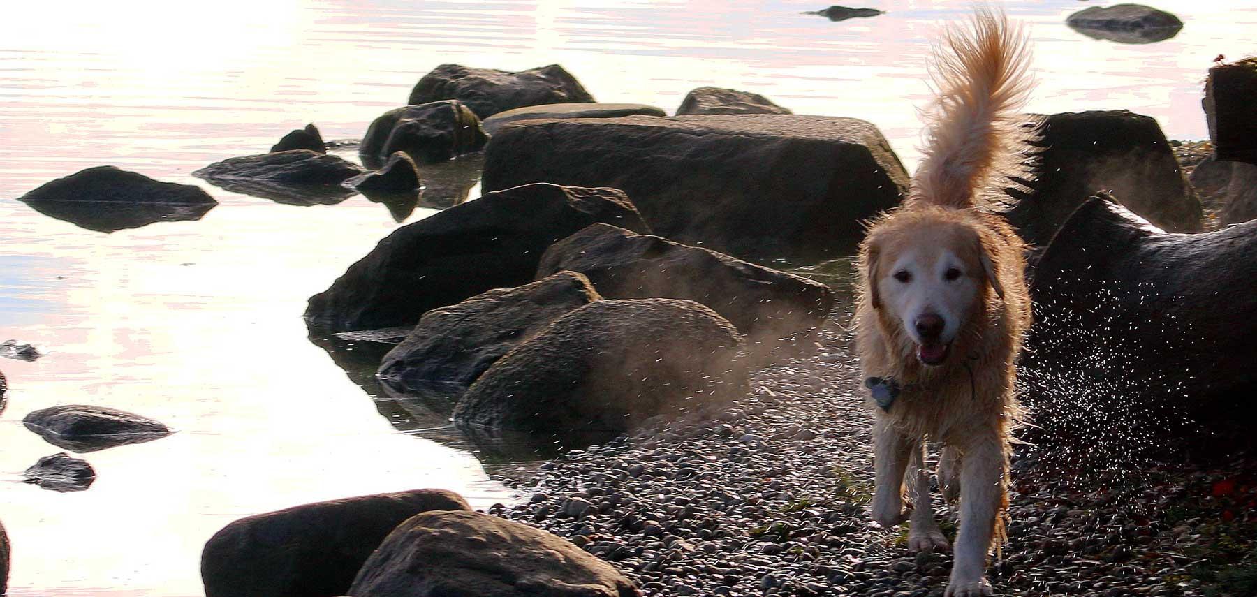 dog-at-lake