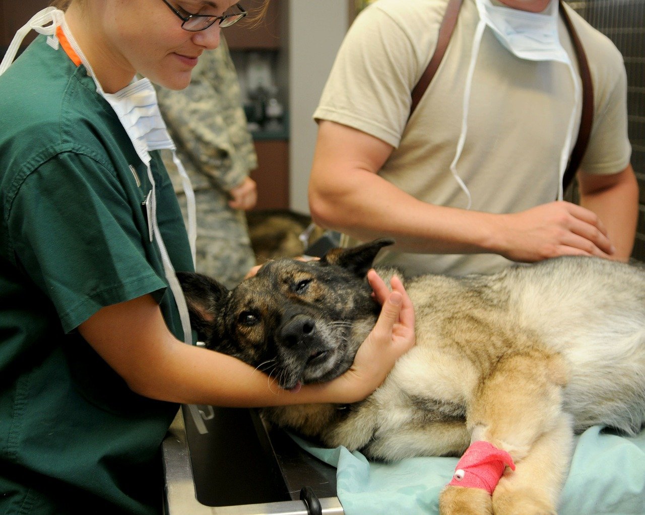 What to Do If You Detect Bloat in Your Dog: An Emergency Guide