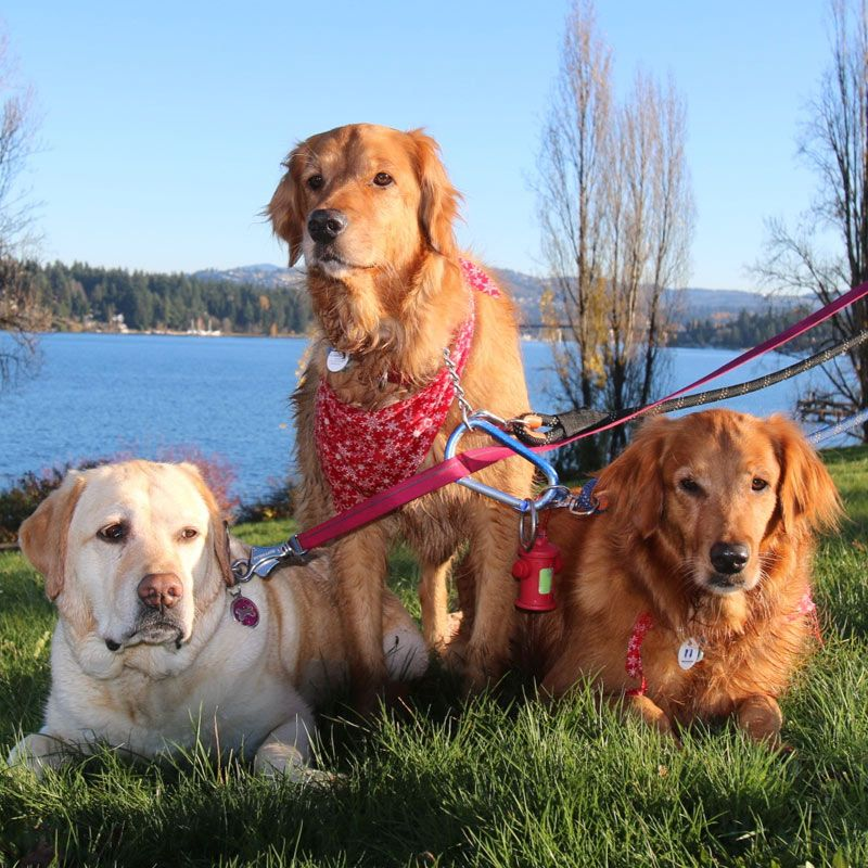 Dog Walking Rates Seattle