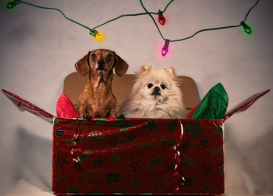 A Guide to Holiday Safety for Pets