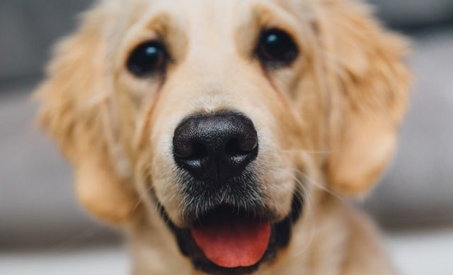 It's Allergy Season! How Are Pets Affected?