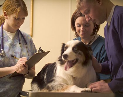 How to Make Vet Visits Easier on Your Pet