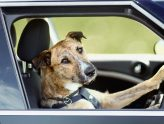 Take me for a ride! How to Keep Your Dog (and YOU) Safe in the Car